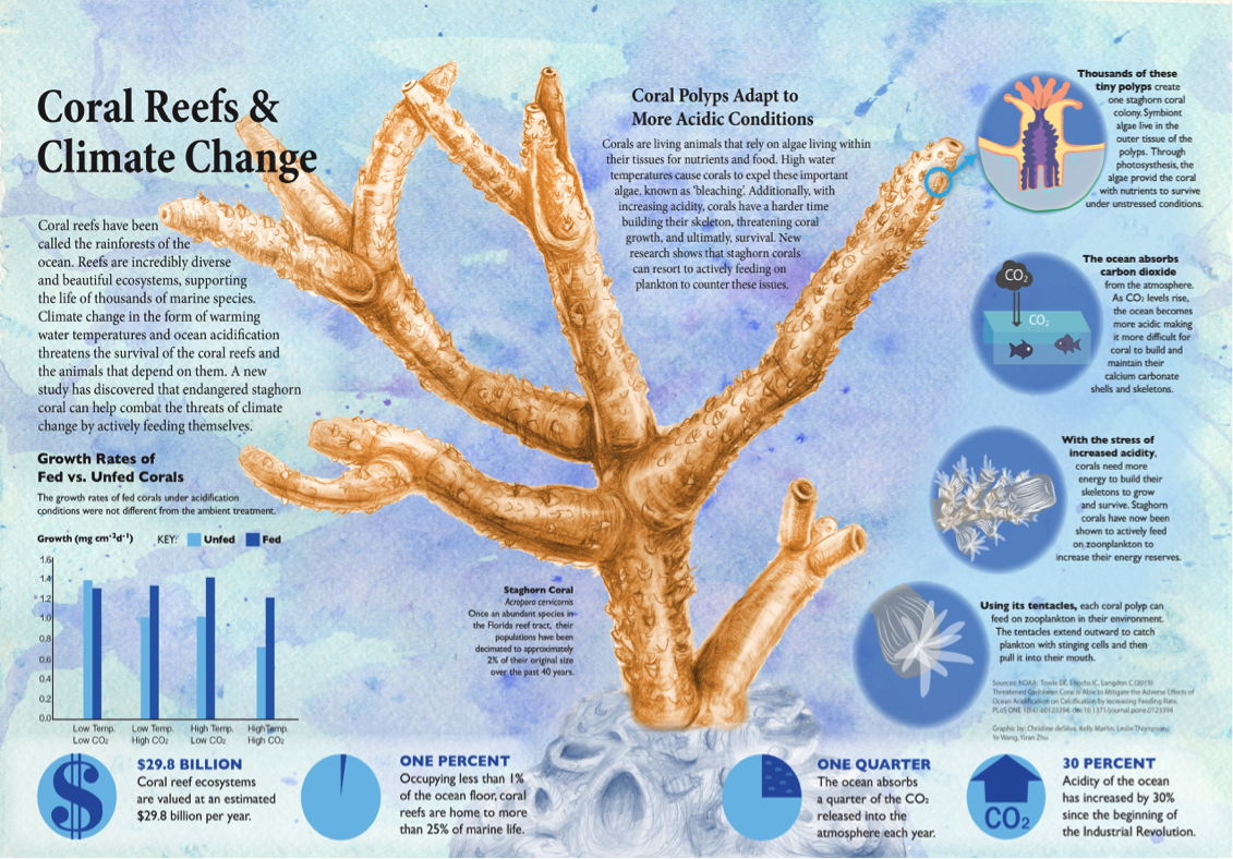 Corals Struggle to Survive | Climate Change - a special report from ...