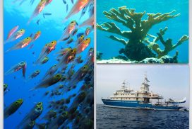 UM Rosenstiel School and Living Oceans Foundation Partner