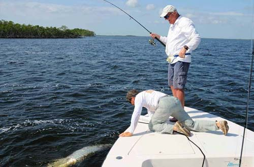 Jerry Ault, professor and chair of marine ecosystems and society at the Rosenstiel School, enjoys tarpon sport fishing in Florida and the Caribbean.