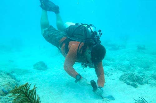 Finding Keys to Coral Survival