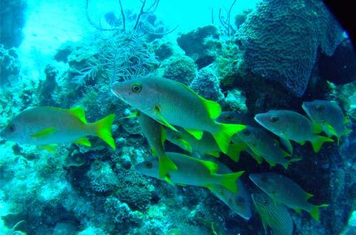 ABESS CENTER: Saving Coral Reefs