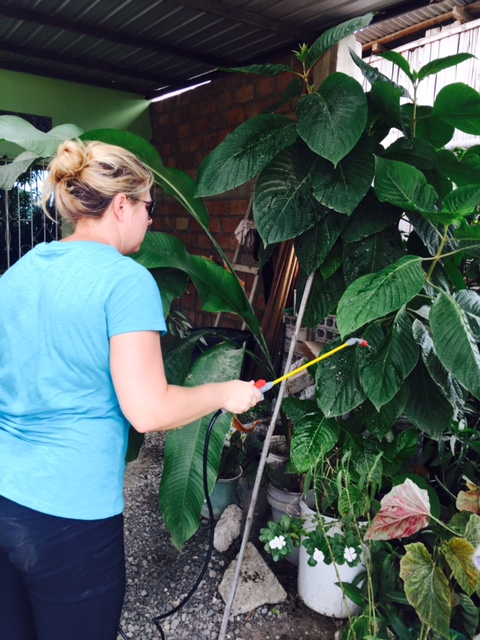 Whitney Qualls, a UM research scientist with the Miller School of Medicine, sprays insecticide on plants in Guayaquil, Ecuador.