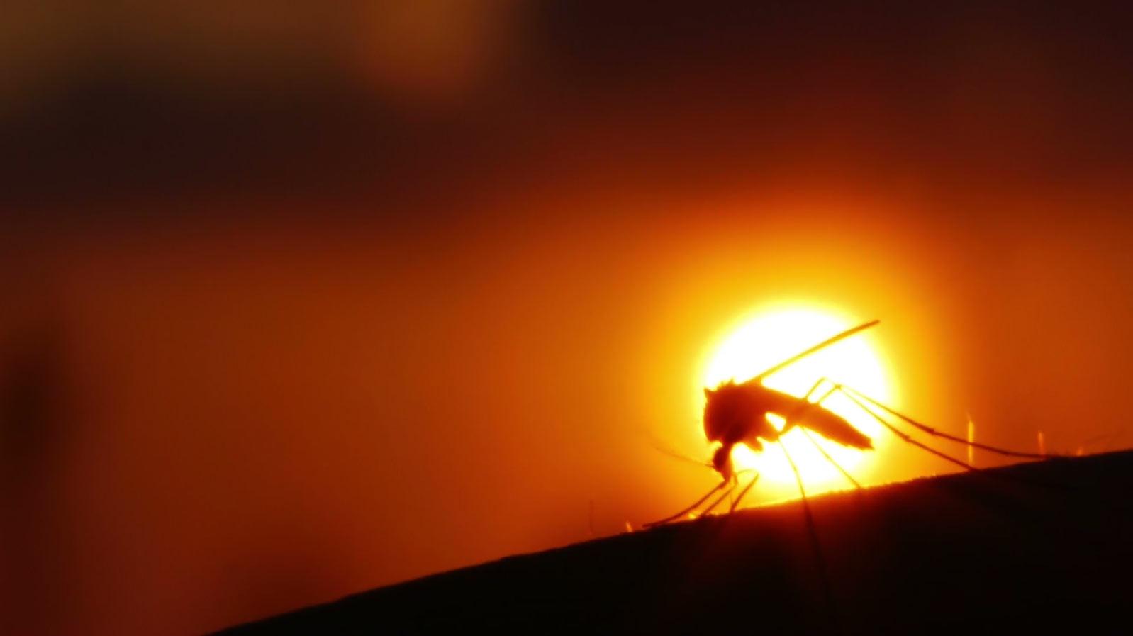 University of Miami - Special Report - Zika Virus